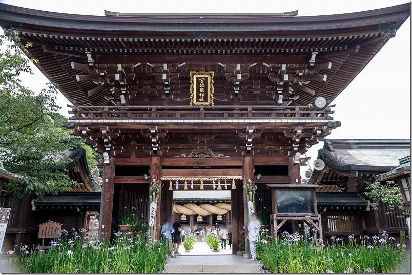 宮地嶽神社、楼門周辺の菖蒲