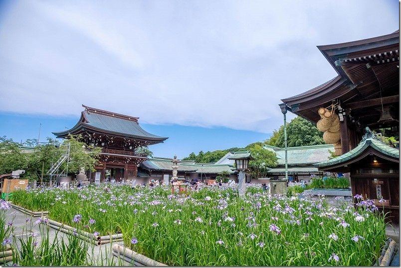 宮地嶽神社、境内の菖蒲