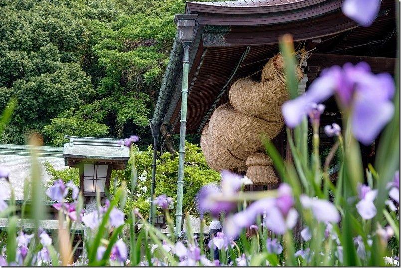 宮地嶽神社、注連縄と菖蒲