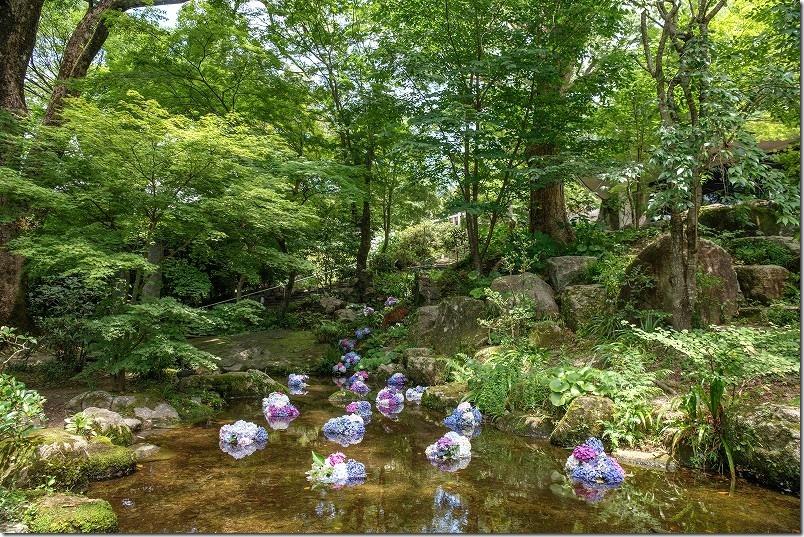 宝満宮・竈門神社の紫陽花
