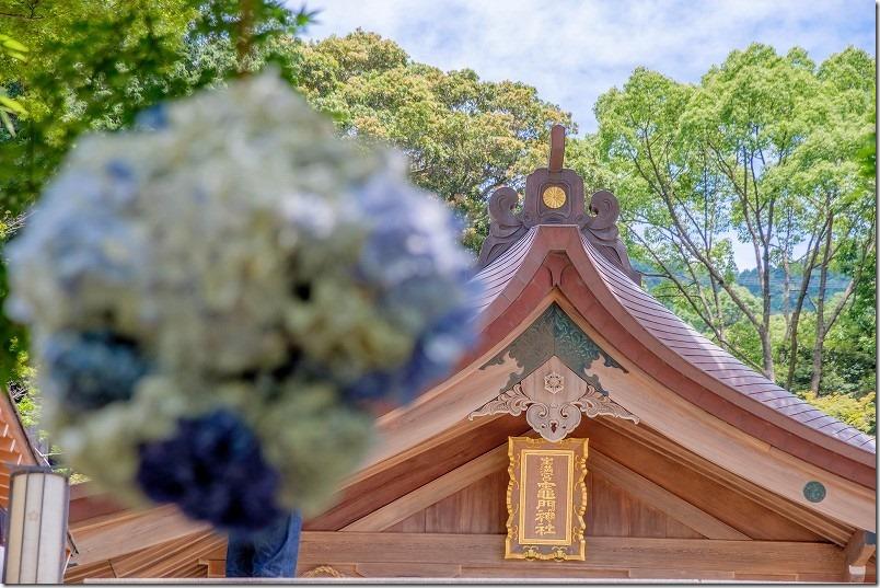 宝満宮・竈門神社の紫陽花玉