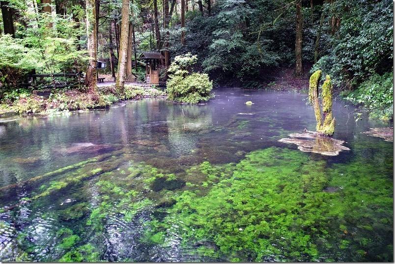 雨の阿蘇・くじゅう、池山水源の湧水