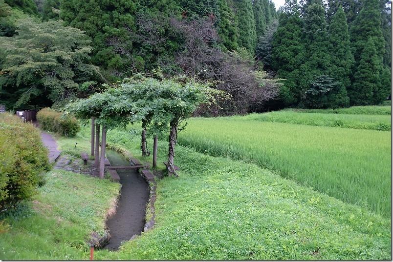 池山水源の冷水スポット、足水