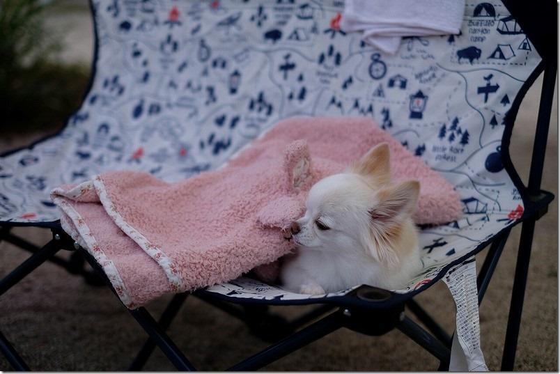 阿蘇・火の国ドッグランのオートキャンプ場で犬と一緒