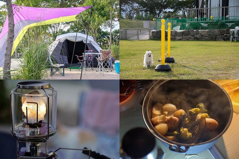 阿蘇 火の国ドッグランで犬とキャンプ