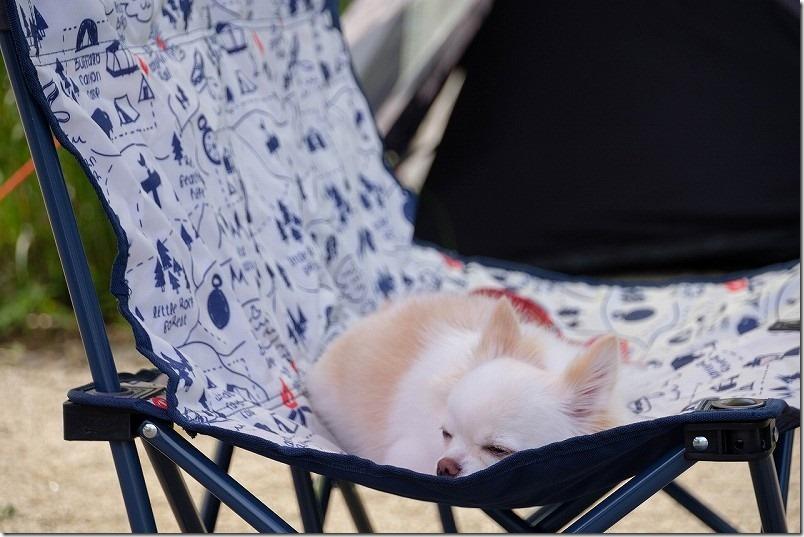阿蘇でキャンプ、犬と一緒